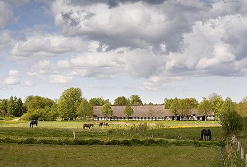 herregård-med-heste
